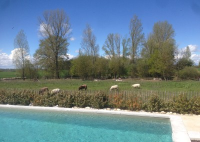 Villa-Lafage-sheep-Lot-et-Garonne