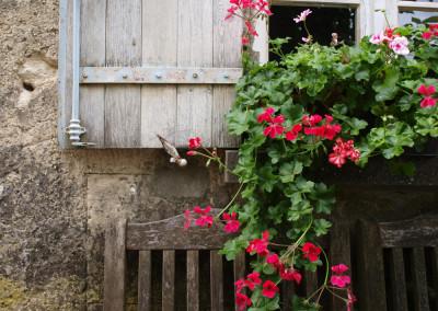 Villa-Lafage-country-house-geraniums