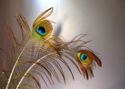 illa-Lafage-country-house-peacock-feather